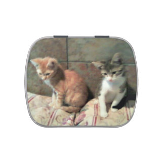 Kittens! Jelly Belly Candy Tin