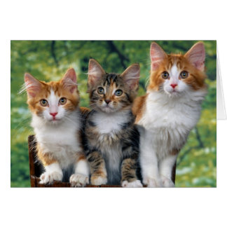 Kittens Card
