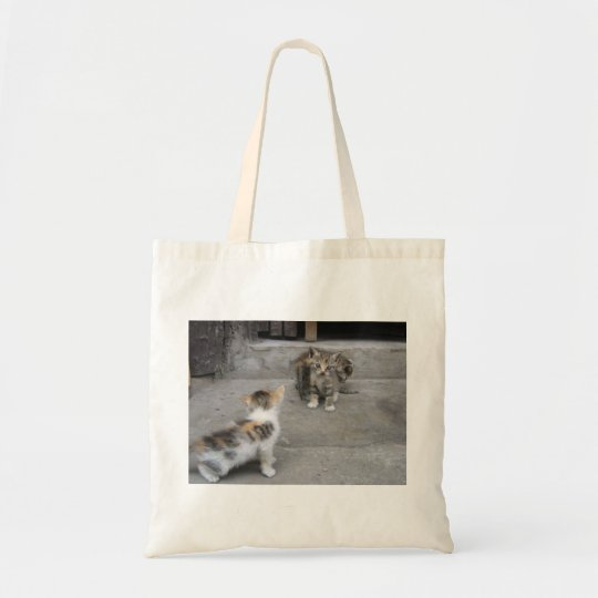 Kittens - Chongqing, China - Bag