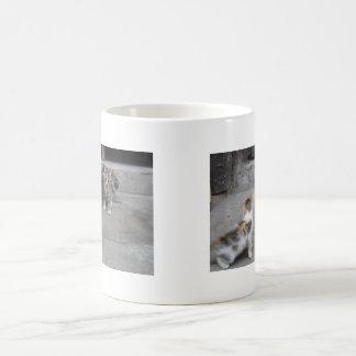 Kittens - Chongqing, China - Mug