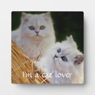 Kittens come play plaque