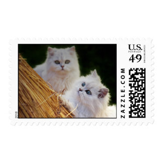 Kittens come play postage