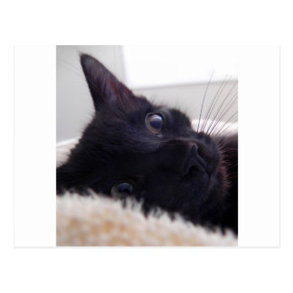 Kitten's Cute Face Postcard