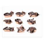 kittens en tiene zapatilla de deportes tarjeta postal
