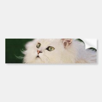 Kittens fascination bumper sticker