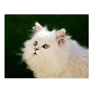Kittens fascination postcard