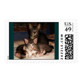 Kittens galore postage stamp