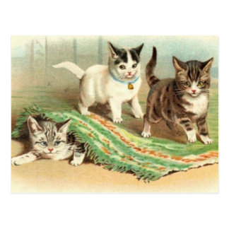 Kittens Hide and Seek Postcard