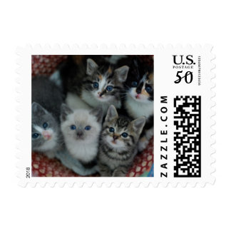 Kittens In A Basket Postage