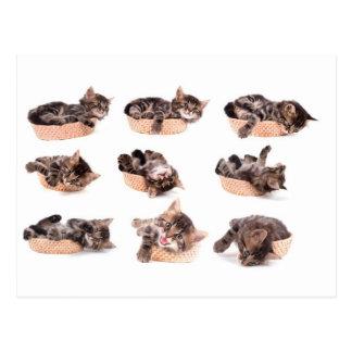 kittens in a basket cartes postales