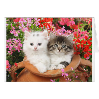 Kittens in a pot. greeting card