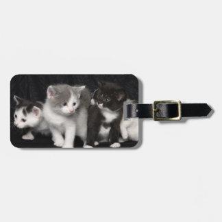 Kittens in a Studio Shot Bag Tag