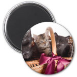 kittens in a wicker basket refrigerator magnet