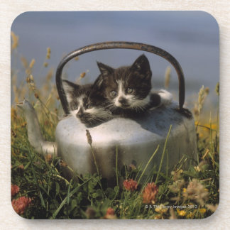 Kittens in an old kettle beverage coasters