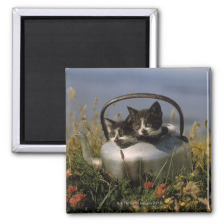 Kittens in an old kettle magnet