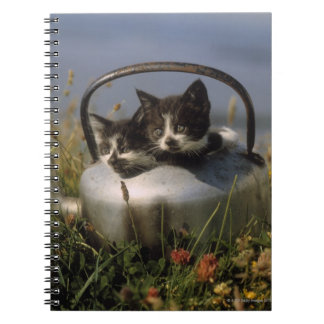 Kittens in an old kettle notebook