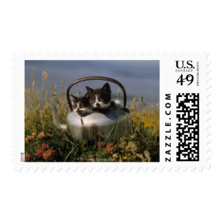 Kittens in an old kettle stamp