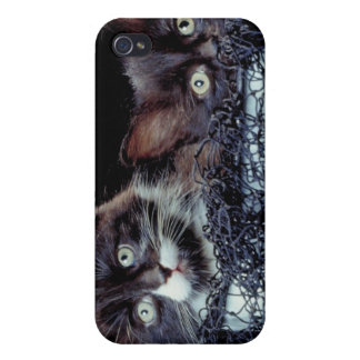 Kittens in container iPhone 4/4S cover