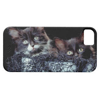 Kittens in container iPhone SE/5/5s case