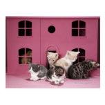 Kittens in doll's house postcard