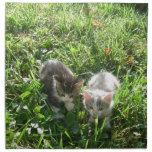 Kittens in Grass Napkins