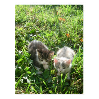 Kittens in Grass Postcard