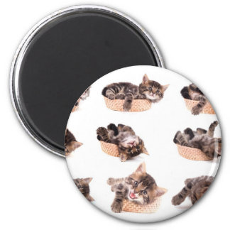 kittens in has tennis shoe magnet