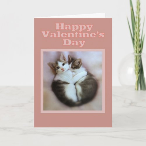 Kittens in Love Happy Valentine's Day Holiday Card