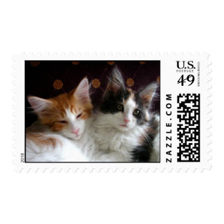 Kittens in Love postage stamps