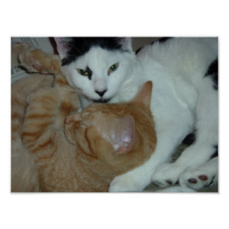 Kittens in Love Print