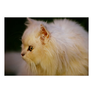 Kittens intelligence poster