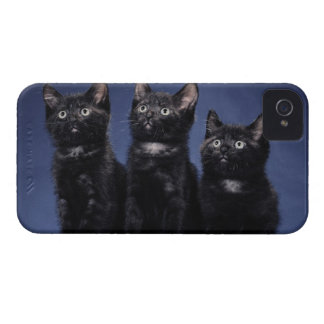 Kittens iPhone 4 Case