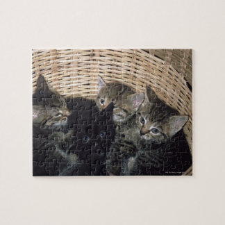 kittens jigsaw puzzle