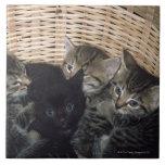 kittens large square tile