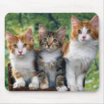 Kittens Mouse Pad