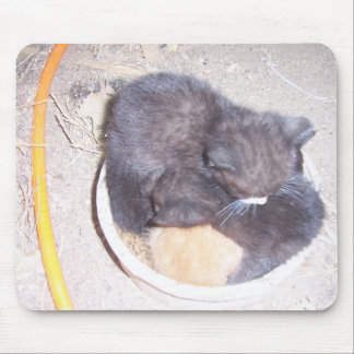 Kittens nap time mouse pad