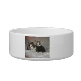 Kittens on a Blanket Bowl
