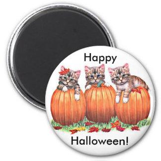Kittens on Pumpkins for Halloween Button Magnet