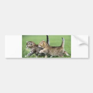 Kittens on the Prowl Bumper Sticker