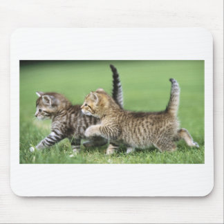 Kittens on the Prowl Mouse Pad