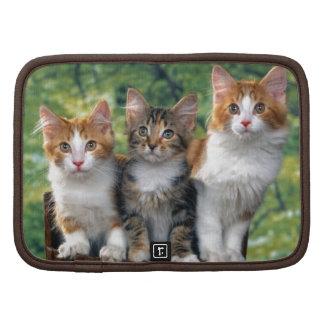 Kittens Planner