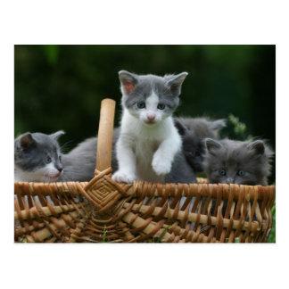 kittens post cards