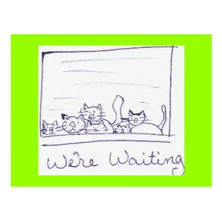 kittens postcard