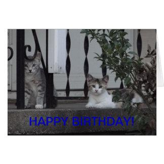 Kittens/Purrrfect Birthday Card