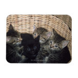 kittens rectangular photo magnet