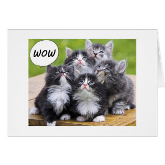 "KITTENS SAY WE FOUND OUT U R ON YOUR ""50th"" LIFE Greeting Card"