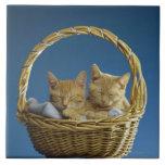 Kittens sleeping in basket ceramic tiles