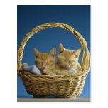 Kittens sleeping in basket postcard