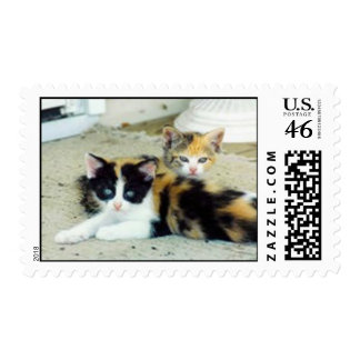 Kittens Stamp