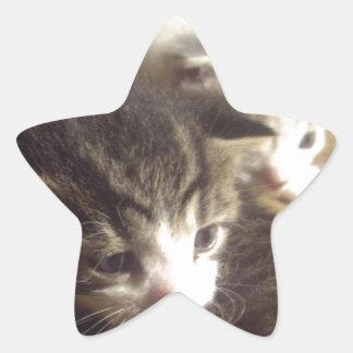 Kittens Star Sticker